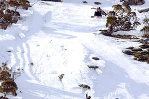 Shredtopia: Aussie Section