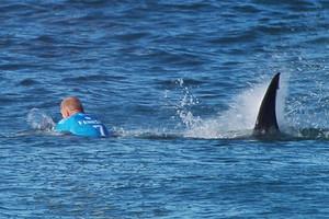 Shark Attack at J-Bay Open